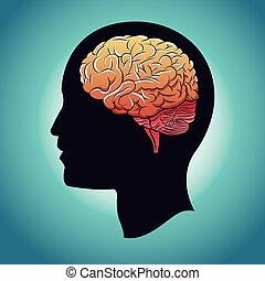 profile head brain human
