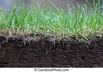 turf - Profile of a turf.