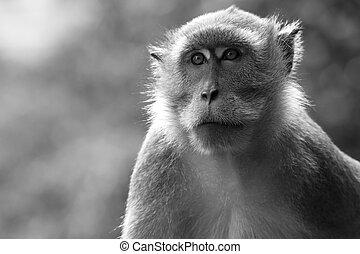 profile of an ape