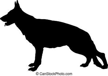 Profile of large German Shepherd dog
