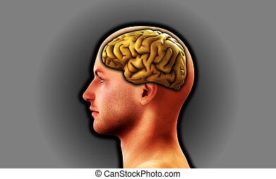 Profile Of Man With Brain 8 - Image of a mans head, for...