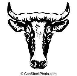 profilo, isolato, toro, ritratto, contorno