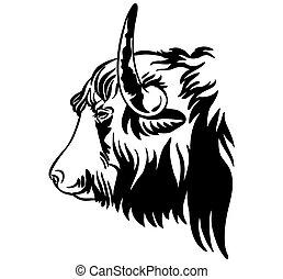 profilo, toro, ritratto, decorativo, contorno