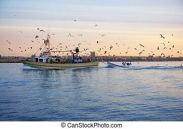 profissional, barco pesca, gaivota, ligado, pôr do sol, amanhecer