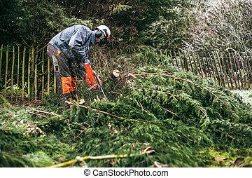 profissional, chainsaw, jardineiro, usando