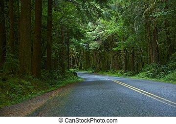 profond, bois, orégon, route