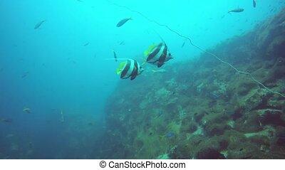 profond, dur, scaphandre, aquatique, écosystème, hobby., ...