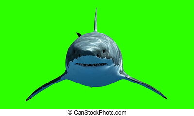 profondeur, vert clair, lentement, blanc, passes., 3d, appareil photo, animation, megalodon, arrière-plan., beau, grand, 4k, nage, requin