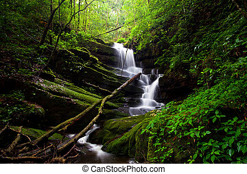 profondo, foresta, cascata