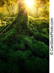 profondo, magia, foresta