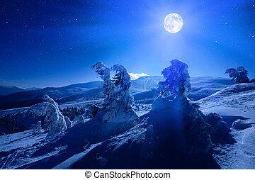 profondo, notte, pieno, neve coprì, sopra, inverno, foresta, luna