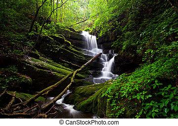 profundo, bosque, cascada