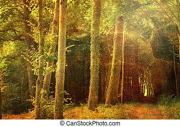 profundo, bosque