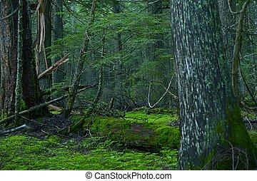 profundo, montana, floresta