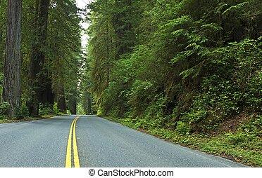 profundo, redwood, estrada, floresta