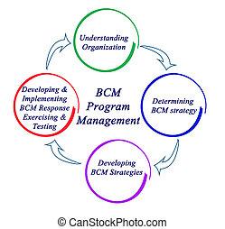 program, bcm, kierownictwo