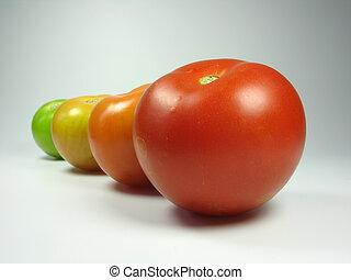 Progress of four tomatoes maturing
