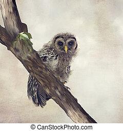 prohibido, owlet, perchas, en un rama