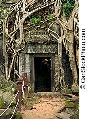 prohm, 寺院, カンボジア, ta