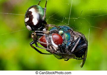 proie, araignés, manger, sien