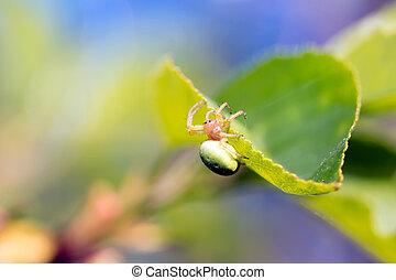proie, araignés, sien