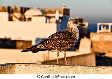 proie, photo, oiseau, fond