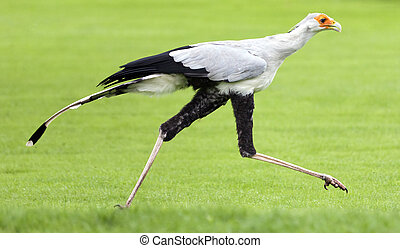 proie, rare, espèce, très, oiseau