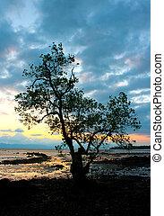 proiettato, albero, mare, tramonto