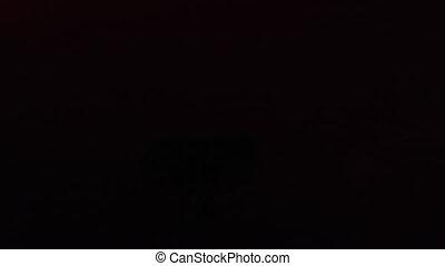 projecteur, briller, lumière, laser, boîte nuit