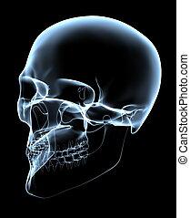 projektion, totenschädel, schief, -, menschliche , röntgenaufnahme