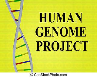 projet, concept, génome, humain