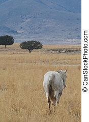 promenade cheval, loin
