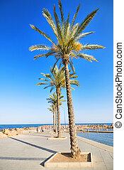 promenade, espagne,  torrevieja, plage,  Alicante