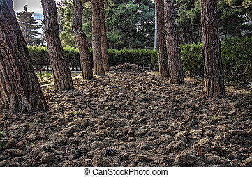 Promenade in a beautiful city park. Baku Botanical Park at the spring time. Green trees