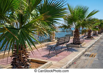 promenade, palmen