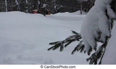 promenade, parc chien, hiver, neige