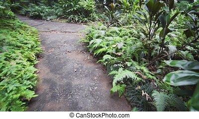 promenade, sentier, personne, premier, jardin botanique, ...