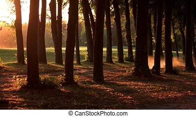 promenades, rc, woods., jeûne, voiture