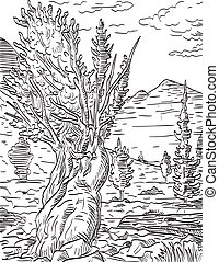 Retro woodcut style illustration of Prometheus tree and Wheeler Peak in Great Basin National Park located in White Pine County in east-central Nevada on isolated background done in black and white.