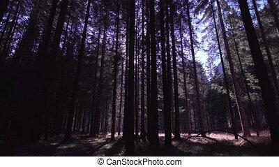 promienie, od, przedimek określony przed rzeczownikami, słońce, w, przedimek określony przed rzeczownikami, drewna, wśród, przedimek określony przed rzeczownikami, wysoki, drzewa