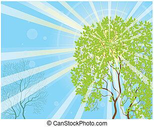 promienie, słońce, drzewo