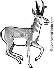vector illustration of a pronghorn antelope running