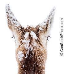 Pronghorns in Snow VII