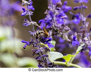 prontamente, flores, direito, 7, guttata, borboleta, parnara