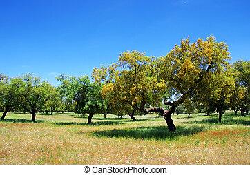 prop, ege, træ, på, felt, hos, portugal