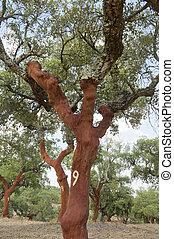 prop træ