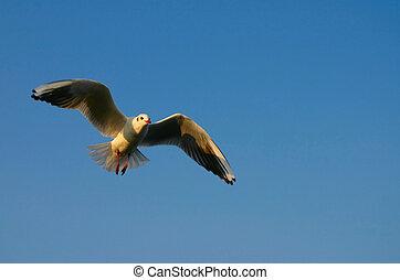 propageren, jouw, vleugels, #4