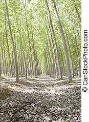 propensión, árboles