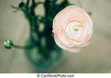 proposta, flor cor-de-rosa, ranunculus
