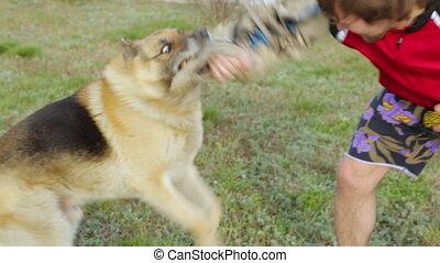 propriétaire, chien assaut, sien, formation
